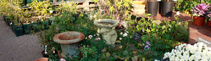 Övrigt trädgård